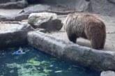 VIDEO: Karu päästab varese uppumissurmast