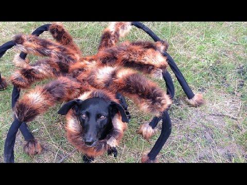 TÜNGAVIDEO: Koer on maskeeritud mutantämblikuks