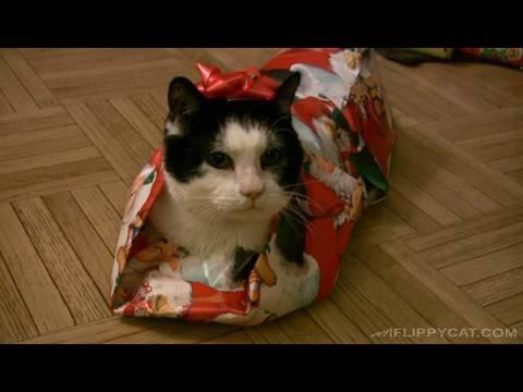 VIDEO: Õpetus ,kuidas pakkida kassi kingipaberisse