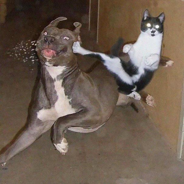FOTOD: 11 pilti, mis tõestavad, et kassid on ninjad
