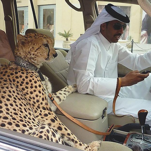 FOTOD: 12 fotojäädvustust, mis on tõenäoliselt võimalikud ainult Dubais