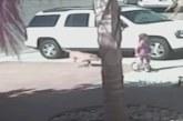 VIDEO: Kass päästab lapse koera rünnakust
