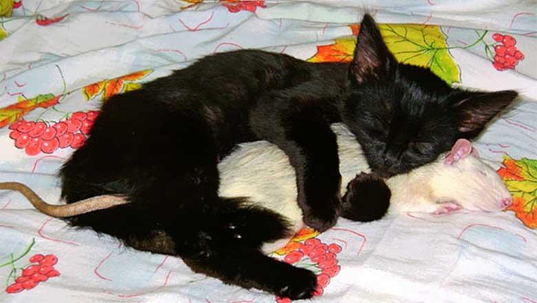 FOTOD: 13 ebatavalist sõpra, kellele meeldib koos magada - need fotod panevad su südame sulama