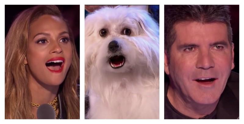 VIDEO: Kohtunike suur hämmastus - rääkiv koer Wendy