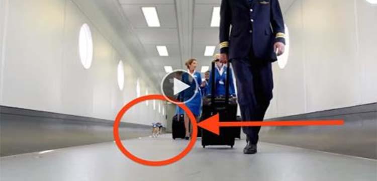 VIDEO: Uskumatu lugu - vaata, mida see väike koer lennujaamas teeb