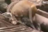 VIDEO: Ülilahe video – loomad päästmas üksteist