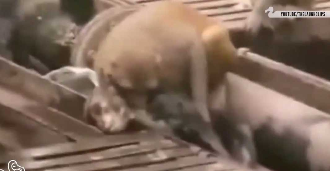 VIDEO: Ülilahe video - loomad päästmas üksteist