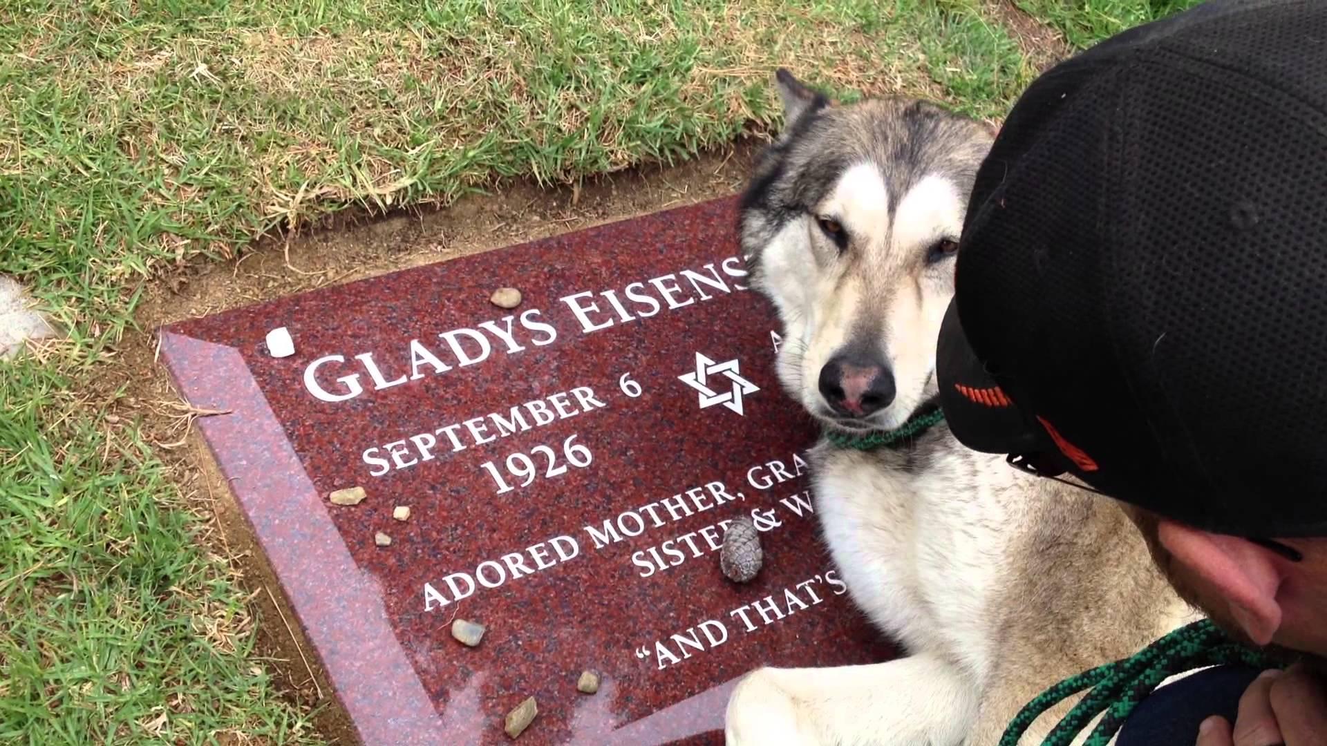VIDEO: Vaata, kuidas koer käitub, kui ta viiakse vanaema hauale