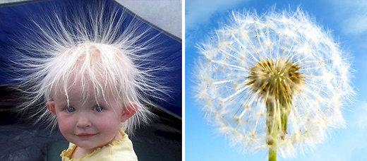 FOTOD: Erinevad asjad, mis on üksteisega kohutavalt sarnased