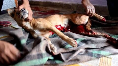 VIDEO: Koer oli surmale väga lähedal, kuni need inimesed ta leidsid ja päästsid