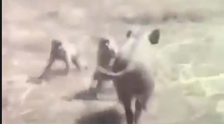 USKUMATU - Vaata, mida need ahvid metsseaga teevad