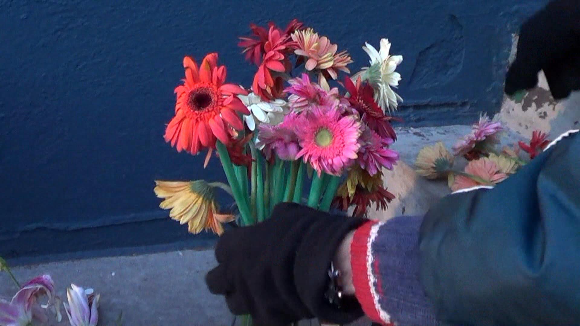 Lahe - vaata, mis lilledega juhtub, kui need jätta ööseks pakase kätte