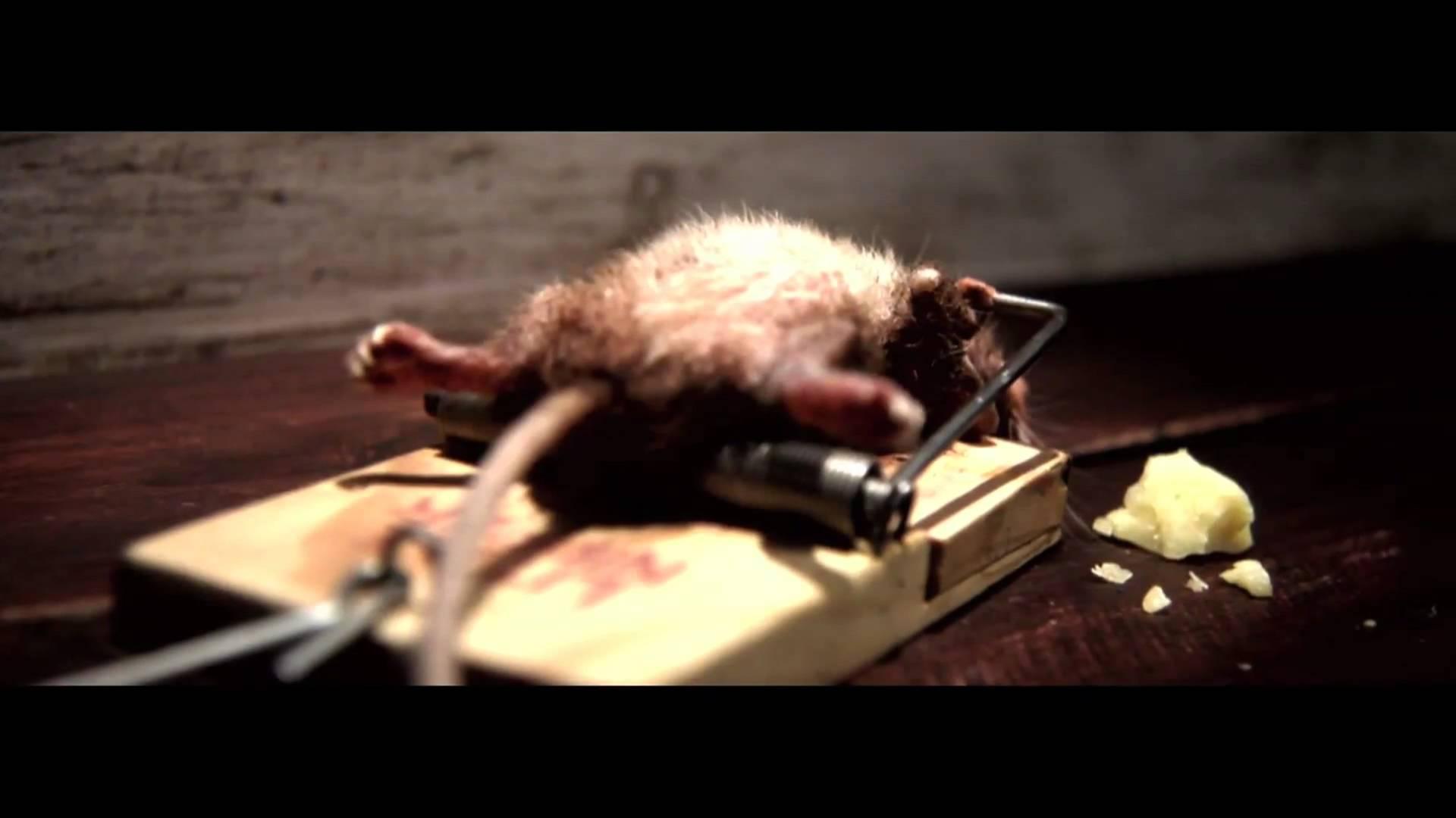 VIDEO: Hiir jääb kinni hiirelõksu, kuid siis juhtub midagi uskumatut...