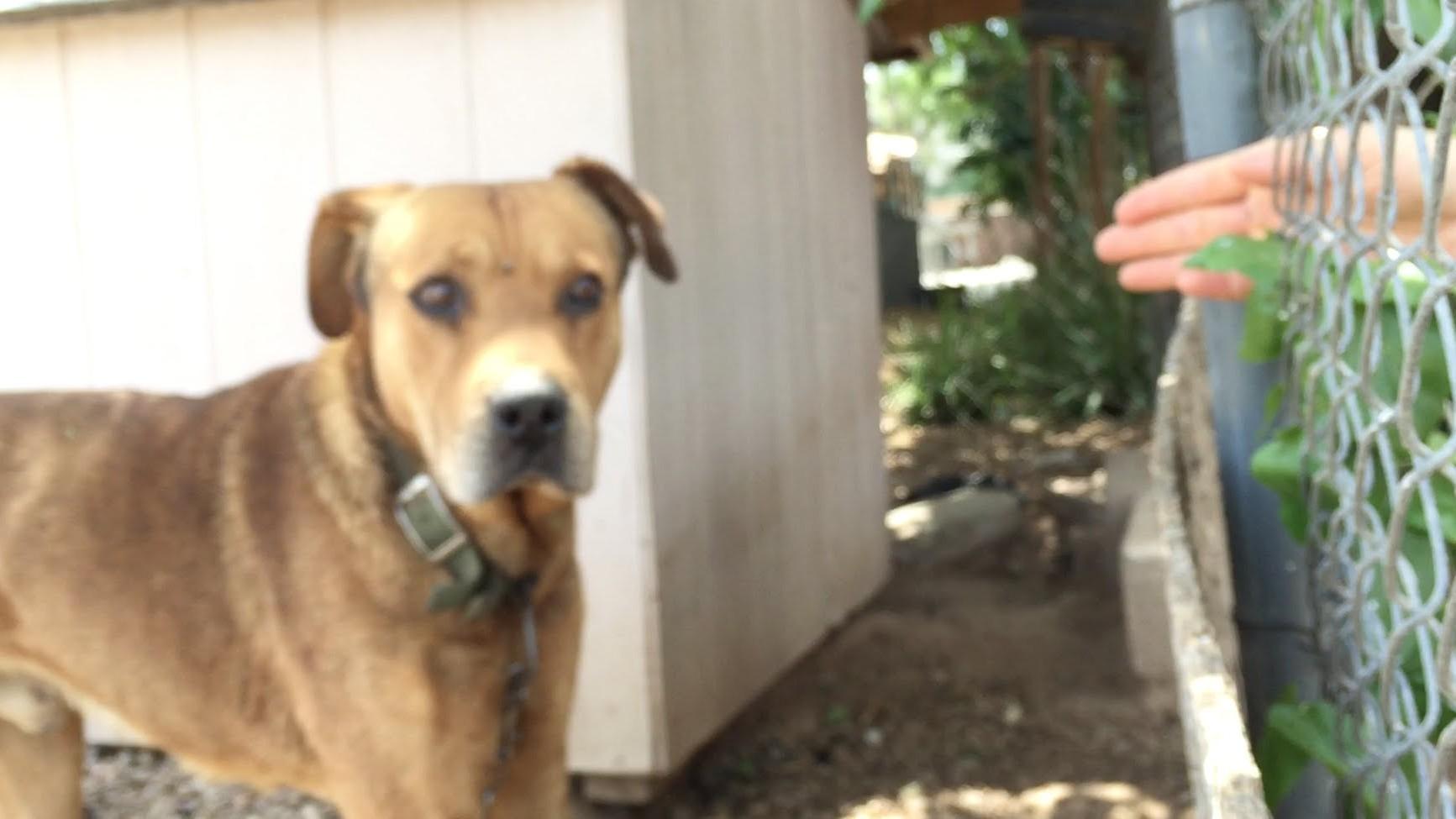 VIDEO: Mees päästis koera, kes oli 10 aastat ketis olnud