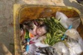 See vastsündinud tüdruk oli jäetud prügikasti surema – vaata, kes selle tüdruku leidis…