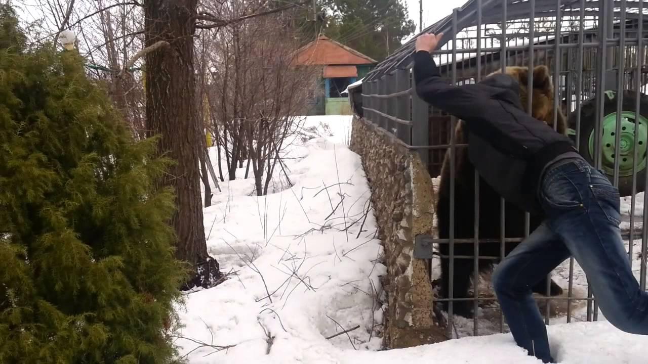 VIDEO: Purjus venelane topib käe karu puuri - juhtub see, mis juhtuma peab