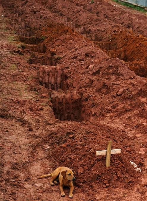 Koer, kes on omaniku haual