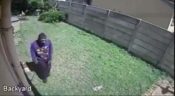 VIDEO: Vaata, mida teeb see metsik koer vargale, kes aeda sisse on hiilinud