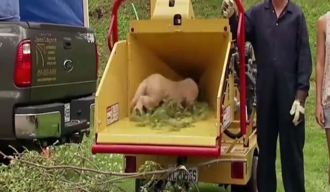 VIDEO: Oh õudust! Oksapurustaja tõmbab väikese koerakutsika endasse