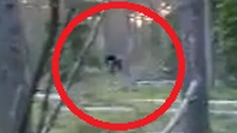 VIDEO: Venemaal tabasid isa ja poeg metsast ülisuure olendi