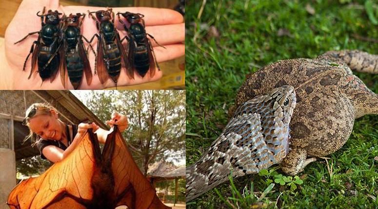 HIRMUÄRATAVAD fotod loodusest