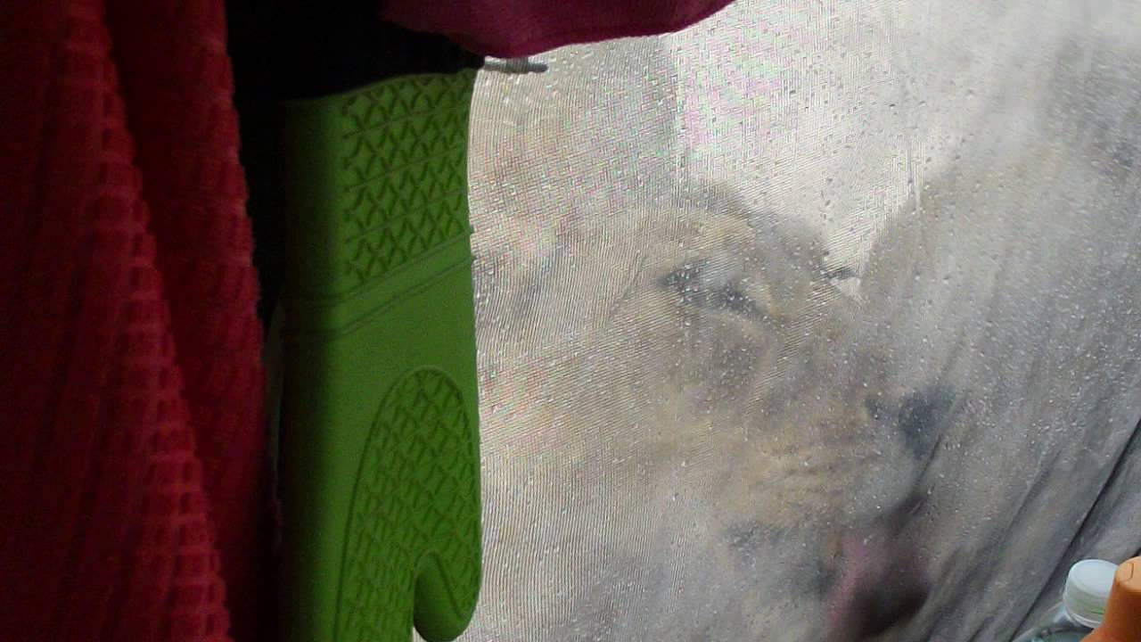 VIDEO: Hirmujudinaid tekitav olukord – Paar telkis Lõuna-Aafrikas ja hommikul  ärgates lakkusid lõvid nende telki