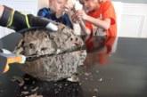 VIDEO: Isa ja poeg lõikavad herilasepesa pooleks – vaata, mis sealt seest välja tuleb…