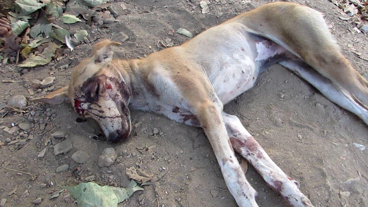VIDEO: See koer oli jäetud aeda surema, kuid vaata, milline ta näeb välja nüüd