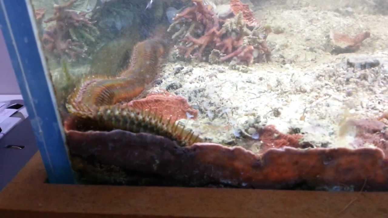 VIDEO: HIRMUÄRATAV - mees hakkas oma akvaariumit puhastama ning leidis sealt seest selle...