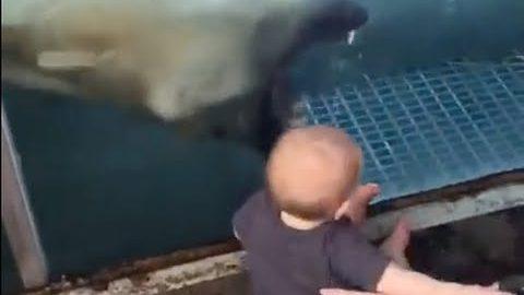 VIDEO: Jääkaru üritab väikest last ära süüa