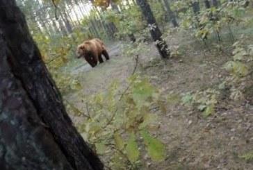 VIDEO: Päris õudne – meest ajab karu taga
