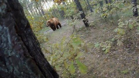 VIDEO: Päris õudne - meest ajab karu taga