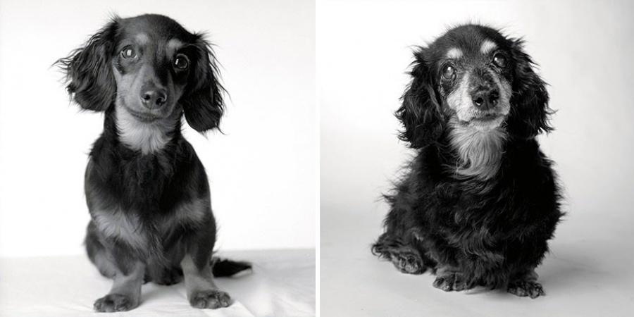 HÄMMASTAVAD FOTOD: Fotograaf on pildistanud koeri siis, kui nad on noored ning aastaid hiljem, kui nad on vanad