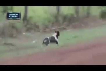 VIDEO: Sellel rallil juhtub midagi väga uskumatut