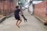 JULM VIDEO: Jube, mida see mees koerale teeb – keerutab jalgadest ja viskab vastu kiviseina