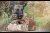 EBATAVALINE sõprus koera ja öökulli vahel