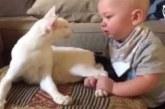 Vanematel polnud aimugi, kuidas varjupaigast võetud kass nende lapsega käituma hakkab…