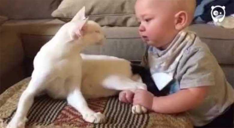 Vanematel polnud aimugi, kuidas varjupaigast võetud kass nende lapsega käituma hakkab...