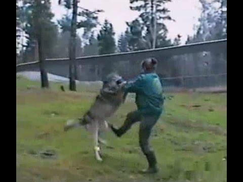 VIDEO: Naine kaitseb meest ohtlikust hundi rünnakust
