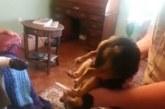 VIDEO: HAHA – KOER mängib surnut, kui ta omanikult ära võetakse
