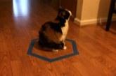 VIDEO: KASSILÕKS – TEHES põrandale ringi lähevad kassid alati sinna sisse