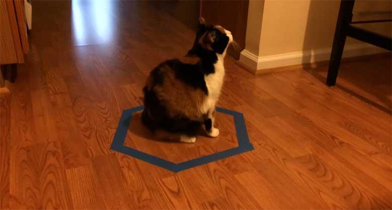 VIDEO: KASSILÕKS - TEHES põrandale ringi lähevad kassid alati sinna sisse