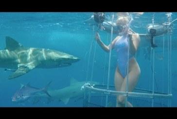 VIDEO: PORNOSTAARI hammustas hai jalast