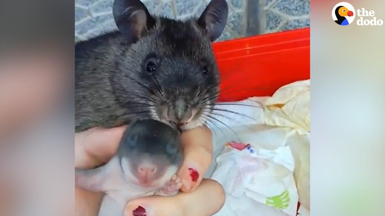 VIDEO: VAATA, KUI uhke see rott oma poja üle on