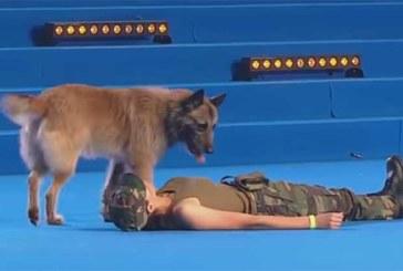 NAINE KUKUB TEADVUSETULT PIKALI – SEE, mida teeb koer on lausa uskumatu