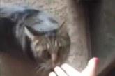VIDEO: MISASJA – VAATA, mida teeb kass, kui tunneb omanikul teise kassi lõhna