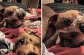 SOTSIAALMEEDIA SENSATSIOON – 90% inimestest ei saa aru, mis toimub selle ülemise koera fotoga
