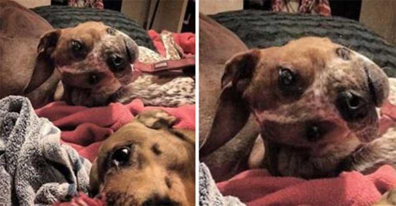 SOTSIAALMEEDIA SENSATSIOON - 90% inimestest ei saa aru, mis toimub selle ülemise koera fotoga