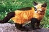 VAU – 40 KÕIGE erilisema välimusega kassi maailmas