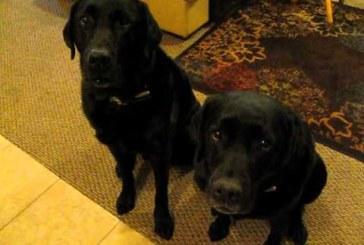 VIDEO: HAHA – VAATA, kuidas üks koer kaebab teise peale peale kui küsitakse, kes varastas küpsise